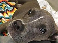 Bluebell's story You can fill out an adoption