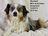 BlueBell's story Please contact Constance