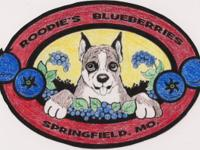 ROODIES BLUEBERRIES Spring is here get your plants why