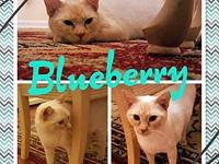 Blueberry's story Blueberry is a very sweet cat. She