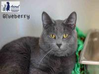 BLUEBERRY's story This handsome boy is available for