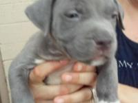 I have 5 bluenose pitbull puppies, 2 males and 3
