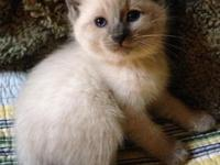 These lovely lovable lively kittens will take your