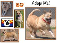 My name is Bo and I am looking for my forever home!  I