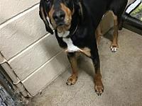 Bo's story Bo here. I am looking for a family that
