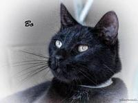 Bo's story Siblings: Laci & BoAll of our pets are