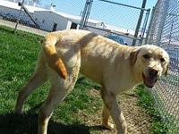 bo's story All Dog Adoption Fee's are $150 Cats are