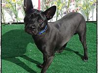 BO's story Bo is a really sweet and well behaved boy at