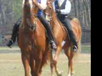 Briarwood Stables and Riding Academy Offering full