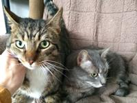 Bob and Missy are two gorgeous extra-large siblings who