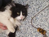 Bob's story Name: Bob Age: 2Y Breed: Domestic Longhair