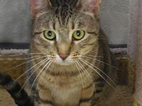 Bobbi's story Bobbi is a brown tabby female weighing 11