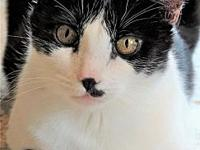 Bobbi's story Description:   Polydactyl and