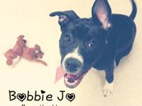 Meet BOBBIE JO! She is a 7 month old Lab/Staffy mix who