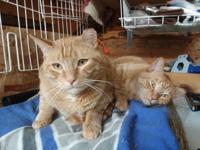 Bobby and Oscar are brothers who came to the shelter