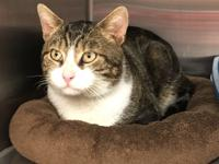 Bobby is a 3 yr old social and friendly neutered male