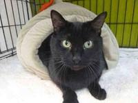 BOBBY's story BOBBY - ID#A084731 is a male, black
