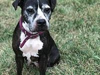 BoBo's story Available Bobo is a super sweet girl,