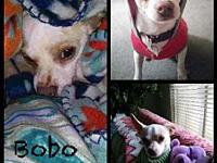 Bobo's story **Bobo is currently being fostered in