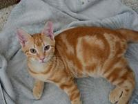 Bodhi's story Bodhi is a stunning bright orange marble