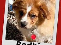 BODHI's story This little ball of puppy fluffiness is