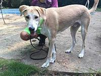 Bodhi's story Bodhi is an active 1-2 year old boy. He