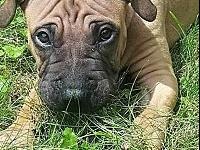 Bodhi's story Holy wrinkles - meet Bodhi - a