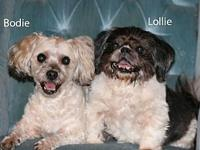 Bodie and Lollie's story   Welcome this precious