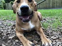 Bofur's story My name is Bofur and I'm a sweet boy! My