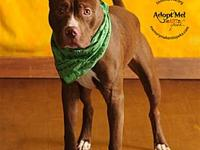 Bogart's story Hi there! My name is Bogart and I'm so