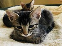 BOINGO's story A177793 Boingo is one of five kittens