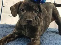 Boitano's story Boitano! This young mixed breed puppy