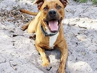 Bolt's story Bolt is a smart and playful Brindle Boxer