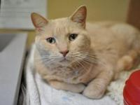 Bolt's story I am a friendly boy who enjoys lounging on