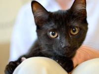 PLEASE ADOPT PRECIOUS JULIET! Silky Black Fur and