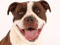 Bomber's story Bomber's adoption includes his: neuter,