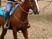 PERFECT BEGINNER HORSE! He is registered AQHA He is