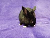 This adorable bunny is being offered for an adoption
