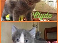 Bonnie and Clyde's story Interested in adopting? Please