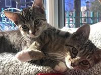 Bonnie and Clyde: Kitten Duo!'s story We are a brother