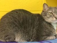 Bonnie is a 4 yr old, spayed female who was recently