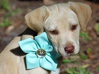 bonnie's story WAGS Rescue introduces BONNIE We think