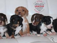 Meet Bonnie Litter there are 4 boys and 2 girls. These