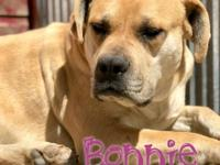 Bonnie is a lovely, submissive, female Mastiff mix.