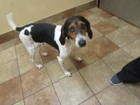 BONNIE *Petsmart GB*'s story Coonhound mix 4 years old
