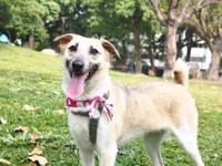 Bonny, spayed female, 15-months-old, 26-lbs  If you
