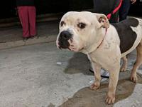Bono's story Sweet , lovable boy who enjoys walks,