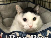 BooBoo at Tazewell County Animal Control
