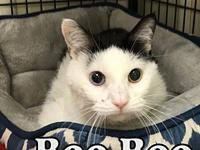 Boo Boo's story BooBoo at Tazewell County Animal