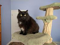 Boo's story Boo is a 7 year old, neutered male, fluffy